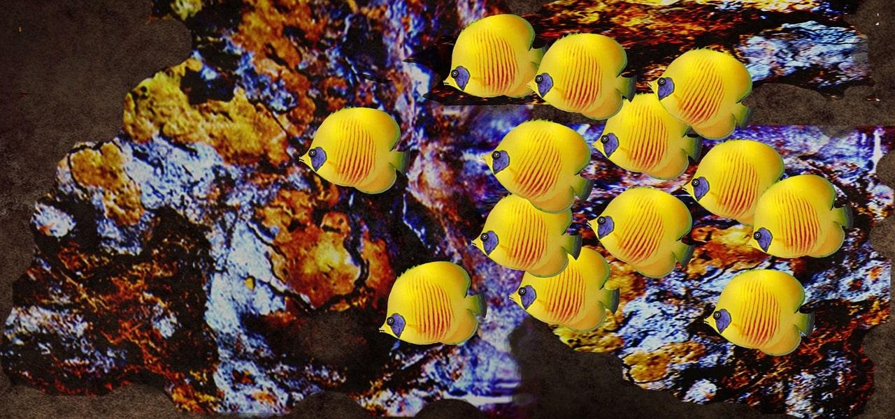 Unterwasserpark Thailand